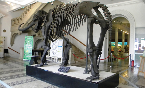 O noapte printre giganti la muzeul Antipa
